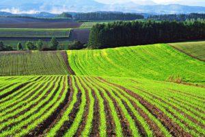 kak-poluchit-zemelnyj-uchastok-besplatno-pod-stroitelstvo-doma-ili-fermerskogo-hozyajstva-2